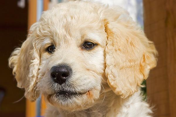 Lili puppy
