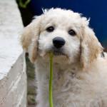 lili_pup_garden3_600_400