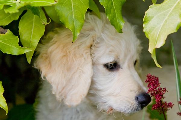lili_pup_garden_600_400