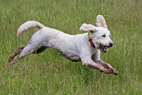 Lili running