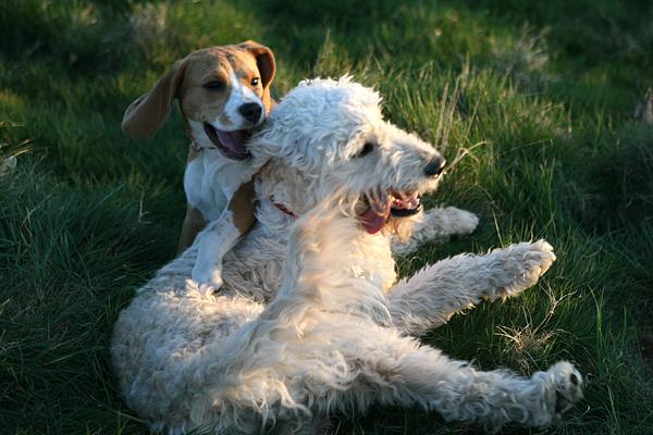 Lili & Daisy