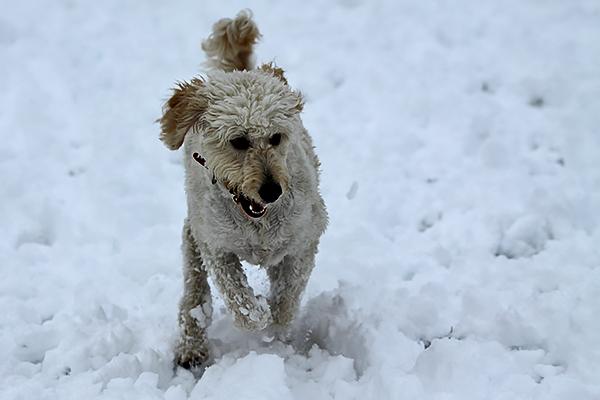 Lili snow