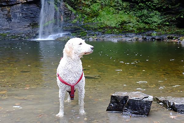 lili_waterfall5
