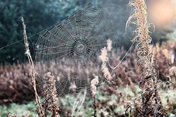 cobweb_600