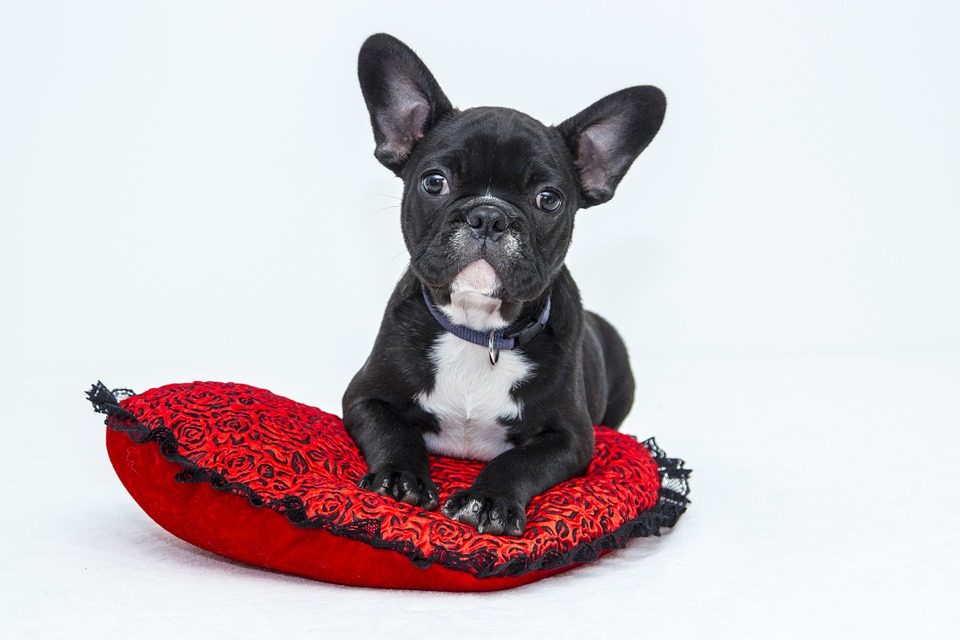 a-quick-guide-for-first-time-puppy-owners