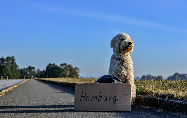 travel-with-dogs